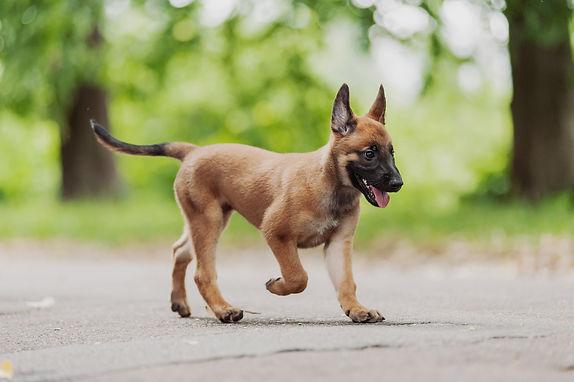 Puppy walking outside