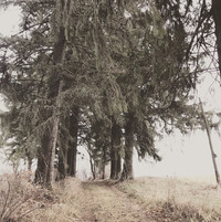 Trees - misty.jpg
