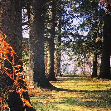 Trees in Autumn 2019.jpg