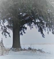 Tree In January (3).jpg