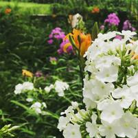Flowers- Outdoors Summer 2019.jpg