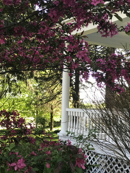 Crab Apple Blossoms up by House - Spring