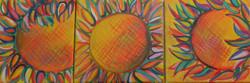 Sunflowers triptych