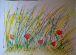 Grasses with poppies