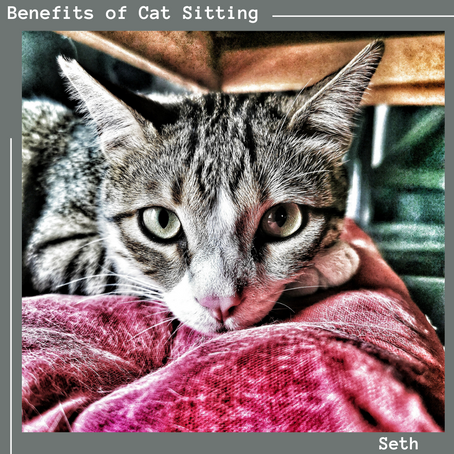 The Benefits of Cat Sitting