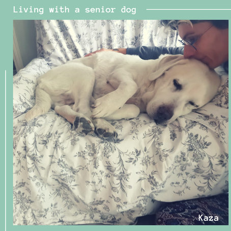 Living with a senior dog