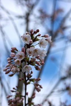 London RAR Spring Mar2021