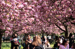 Greenwich park spring 2019