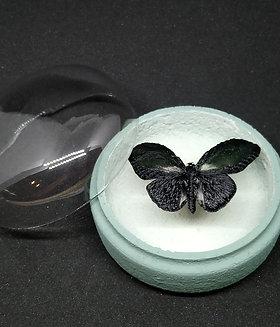 Mini globe papillon noir aux reflets verts