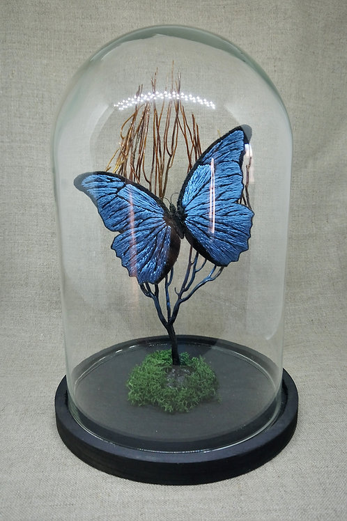 Papillon bleu sous cloche en verre