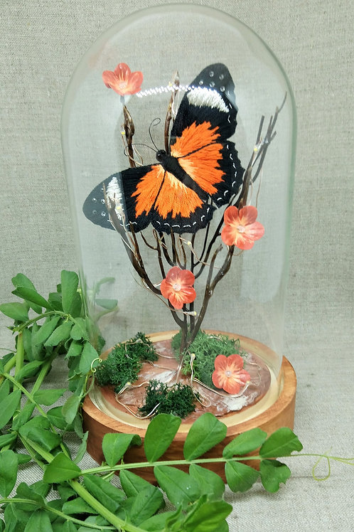 Papillon orange sous globe en verre