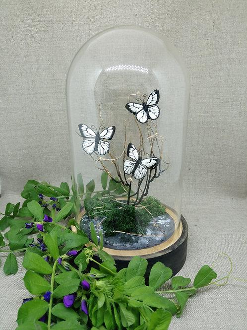 Papillons blancs sous globe en verre