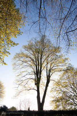 trees_005.jpg