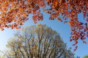 trees_009.jpg