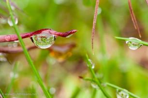 Garden_320.jpg