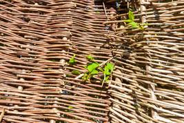 trees_056.jpg