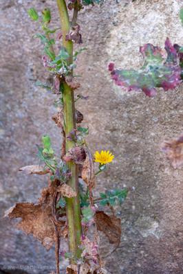 Weeds_065.jpg