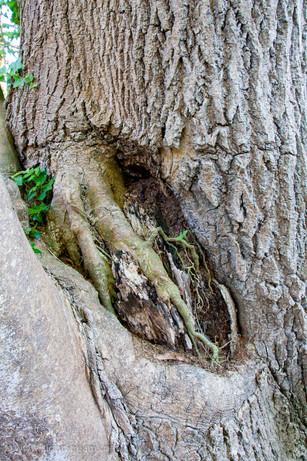 trees_054.jpg