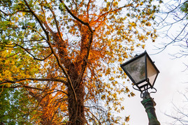 trees_018.jpg