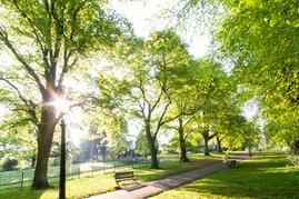 trees_025.jpg