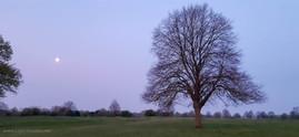 trees_001.jpg