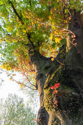 trees_017.jpg