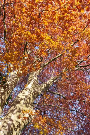 trees_012.jpg