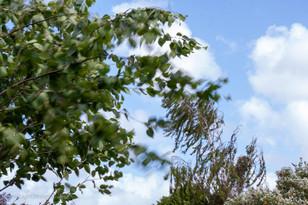 trees_020.jpg