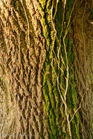 trees_053.jpg