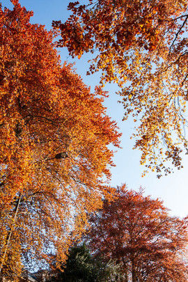 trees_013.jpg