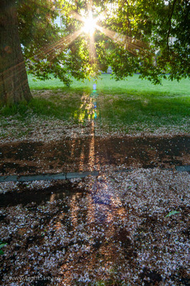 trees_035.jpg