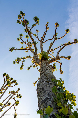 trees_029.jpg