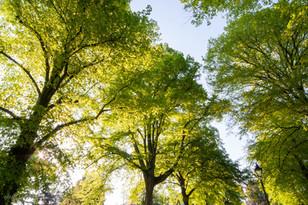 trees_024.jpg
