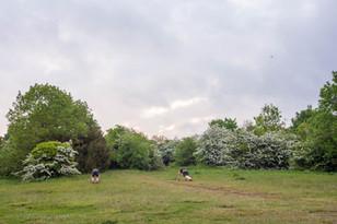 trees_022.jpg