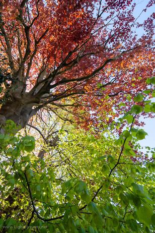 trees_011.jpg