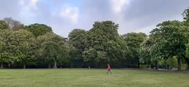 trees_021.jpg