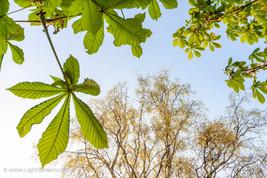 trees_036.jpg