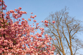 trees_008.jpg