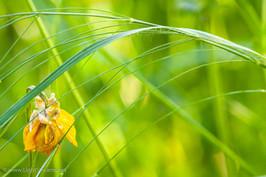 Weeds_210.jpg
