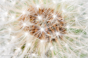 Weeds_063.jpg