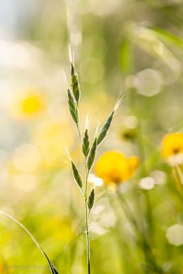 Weeds_060.jpg