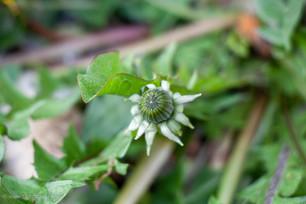 Weeds_062.jpg