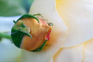Garden_314.jpg