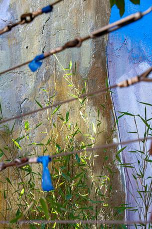 Weeds_070.jpg