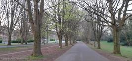 trees_030.jpg