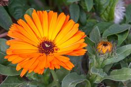 Weeds_061.jpg