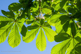 trees_037.jpg