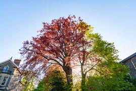 trees_010.jpg