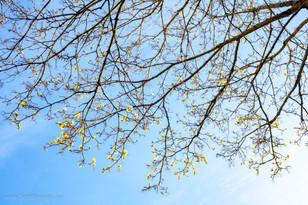 trees_003.jpg