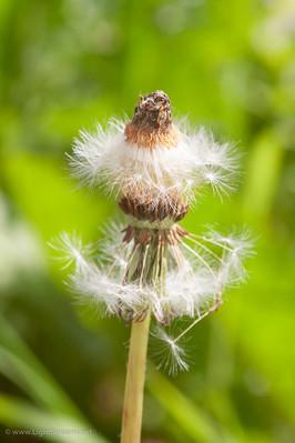 Weeds_064.jpg